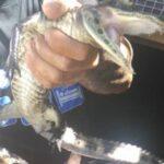 Κατασχέθηκαν στη Ρόδο 400 παπαγαλάκια, 12 φίδια και 5 αλιγάτορες