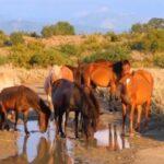 Τα άγρια άλογα στη Βαλαώρα Ευρυτανίας....VIDEO