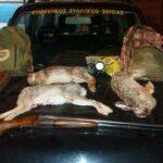 Συλλήψεις για νυχτερινή λαθροθηρία στην Κρητη