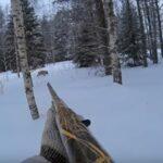 Ενα διαφορετικό κυνήγι λύκου στην παγωμένη Ρωσία....VIDEO