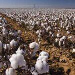 ΚΣ Ξάνθης : Κυνηγοί προσοχή στις καλλιέργειες