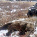 Φρικτός θάνατος για 6χρονο στη Ρωσία: Τον κατασπάραξε αρκούδα