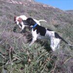 Ηλεκτρονική σήμανση σκύλων από τον ΚΣ Αμαλιάδας