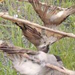 """ΚΥΠΡΟΣ : Παράνομοι κυνηγοί στα… """"ξόβεργα""""του Ταμείου Θήρας"""