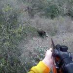 Εντυπωσιακές τουφεκιές σε αγριόχοιρους με ραβδωτά....VIDEO