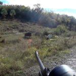 Εντυπωσιακές κοντινές βολές σε αγριογούρουνο....VIDEO