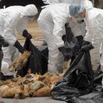 Μέτρα για να αποφευχθεί η είσοδος της γρίπης των πτηνών από τη Βουλγαρία