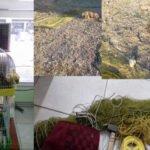 Μήνυση για χρήση παγίδων για σύλληψη ωδικών πτηνών