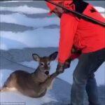 Κυνηγός σώζει ελάφι από παγωμένη λίμνη...VIDEO