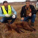 Εντοπίστηκε νεκρή αρκούδα στην Καστοριά