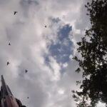 Ωραίες μακρινές τουφεκιές σε ελληνικά κυνήγια φάσσας.....VIDEO