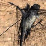 ΚΥΠΡΟΣ:  Νέο πρόστιμο μαμούθ 8.000 ΕΥΡΩ για λαθροθηρία