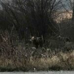 Επιχείρηση απομάκρυνσης αρκούδων από τις παρυφές της Καστοριάς