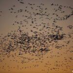 66874 πουλιά μετρήθηκαν στο Δέλτα του Έβρου!
