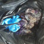 Ένα τσουβάλι....φόλες βρήκε θηροφύλακας της ΚΟΜΑΘ