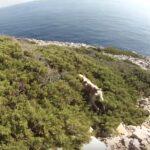 Κυνήγι αγριοκούνελου στα δύσκολα βουνά της Καλύμνου....VIDEO