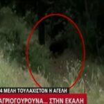 Αγριογούρουνα «σουλατσάρουν»... στην Εκάλη...VIDEO