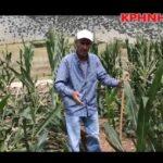 Απόγνωση από τις ζημιές των αγριόχοιρων στο Ζάρκο Τρικάλων...VIDEO