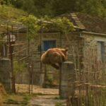 Αρκούδα πηδάει τη μάντρα σπιτιού στο Ζαγόρι.....