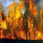 Αυτά που συνήθως δεν ακούγονται για τις δασικές πυρκαγιές