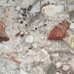 ΚΥΠΡΟΣ : Μασκοφόροι γέμισαν με φόλες κυνηγότοπο