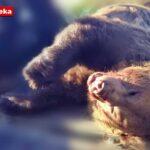 Τροχαίο με αρκούδα στην Καστοριά. Στο νοσοκομείο ο οδηγός