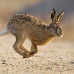 Εξαιρετικά πλάνα από κυνήγι λαγού στην Πίνδο....VIDEO