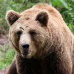 Γενναίος 15χρονος έπεσε στα δόντια αρκούδας για να σώσει συγγενή του