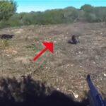 Τουφεκιές σε κυνήγι αγριόχοιρου στην Ισπανία... VIDEO