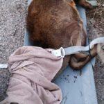 Ελάφι που έπεσε σε όρυγμα έσωσε η Πυροσβεστική