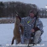 Κυνήγι αλεπούς στα χιονισμένα Σκανδιναβικά δάση....VIDEO