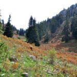 Σειρά προτεραιότητας για την Ελεγχόμενη Κυνηγετική Περιοχή Κόζιακα