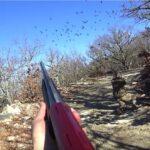 Μόνο τουφεκιές, σε Ελληνικά κυνήγια φάσσας.....VIDEO