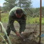 ΚΥΠΡΟΣ : Απελευθερώσεις λαγών από τον ΚΣ Κόρνου...VIDEO