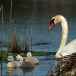 Eστία της γρίπης των πτηνών H5 εντοπίστηκε στη Βουλγαρία