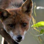 Τα ξενικά είδη-εισβολείς, κύρια αιτία εξαφάνισης πολλών ζώων και φυτών