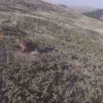 Απολαυστικά στιγμιότυπα από κυνήγι λαγού στην Ελλάδα....VIDEO