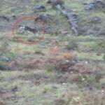 Εξαιρετικό κυνηγετικό βίντεο από κυνήγι λαγού στην Πίνδο....VIDEO
