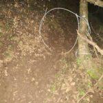 Συλλήψεις για λαθροθηρία αγριόχοιρων με θηλιές