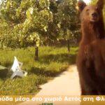 Αρκούδα πρόσωπο με πρόσωπο με οδηγό στο χωριό Αετός στη Φλώρινα....VIDEO