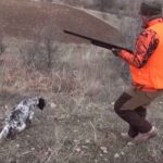 Φέρμες και τουφεκιές σε κυνήγια πέρδικας....VIDEO