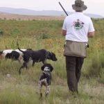 Κυνήγι ορτυκιού με κούρτσχααρ και πόιντερ...VIDEO