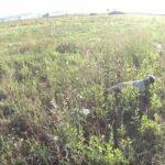 Κυνήγι ορτυκιού στην Καστοριά...VIDEO