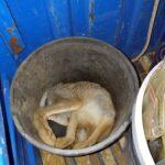 Μήνυση για νυχτερινή λαθροθηρία λαγού από την θηροφυλακή της Α'ΚΟΚΔ