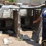 5.000 ευρώ δίνει ο κυνηγός της Παναγίτσας για τον εντοπισμό των δραστών