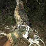 Εκπαιδευμένο γεράκι κατέρριψε drone πάνω από την οικία της Γιάννας Αγγελοπούλου