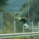 Αρκούδα… προσπάθησε να περάσει την Εγνατία Οδό!