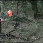 Τουφεκιές σε κυνήγια αγριόχοιρου στη Γαλλία....VIDEO