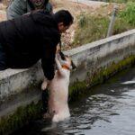 Θηροφύλακας σώζει σκύλο από αρδευτικό κανάλι