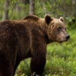 Καστοριά: Οδηγός τραυματίστηκε από σύγκρουση με αρκούδα!